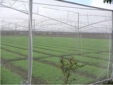 《上禾屋》4尺白網/防蟲網/紗網/溫室用網/農業用塑膠網/木瓜網/蔬菜網/圍籬軟網32目(另有3尺寬)