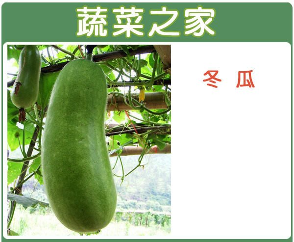 【蔬菜之家】G09.冬瓜種子20顆(青殼長冬瓜,果長.蔬菜種子)