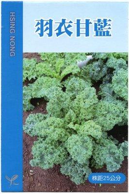 【野菜部屋~蔬菜種子】E50 羽衣甘藍種子0.55公克(約200粒) , 風味濃 , 採收期長 ,每包12元~