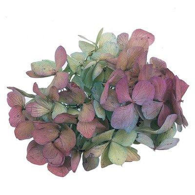 ღ萊姆森林【Preserved 紫+綠雙色繡球(1盒)】現貨【DT064143】