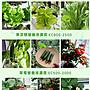 菜多多水耕營養液無土栽培水耕蔬菜瓜果花卉綠植水溶肥料,可泡200公升,有現貨