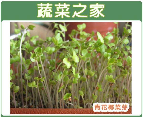 【蔬菜之家】J03.青花椰菜芽種子2000顆(芽菜種子)