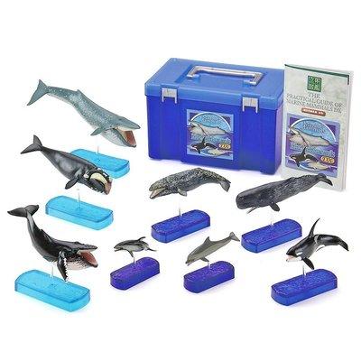 日本正版 立體圖鑑擬真模型BOX 海洋哺乳類DX 8種組 小模型 小公仔 日本代購