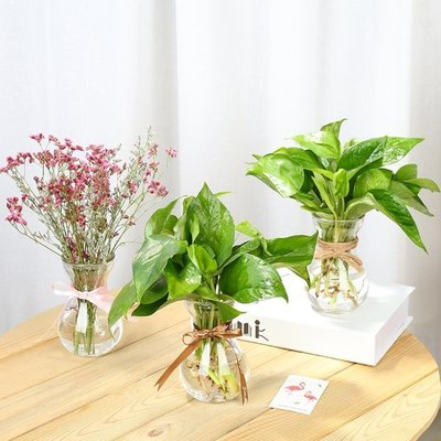 歐式玻璃花瓶水培植物綠蘿容器養花透明瓶...