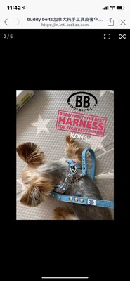 buddy belts加拿大純手工胸背 加拿大BB眼鏡胸背高級藍色有钻3號