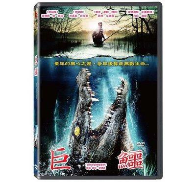 合友唱片 面交 自取 巨鱷 DVD THE HATCHING DVD