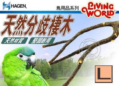 【幸福培菓寵物】HAGEN赫根》鳥用品系列81541鳥用天然分歧棲木L號 特價380元