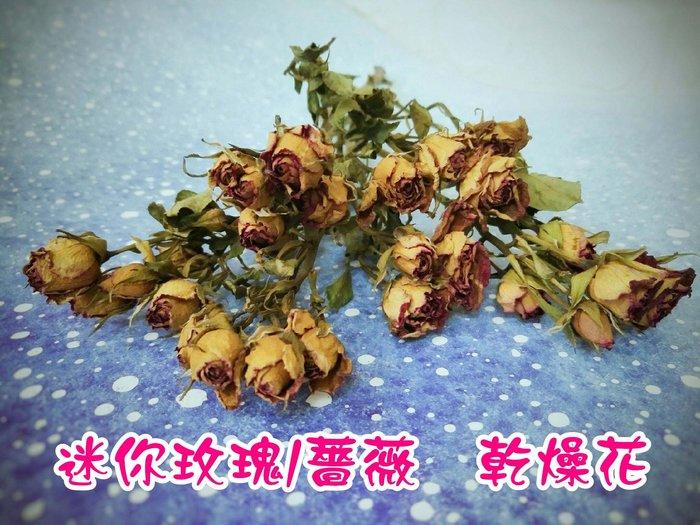 ✿花材批發✿迷你 玫瑰乾燥花 現貨供應 玫瑰花 薔薇  乾燥花 小玫瑰  拍照道具 攝影道具 永生花 朵希幸福烘焙