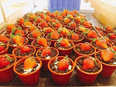 ❤ 雪屋麵包坊 ❥ 生日可分享的小點心款式 ❥ 提拉米蘇盆栽
