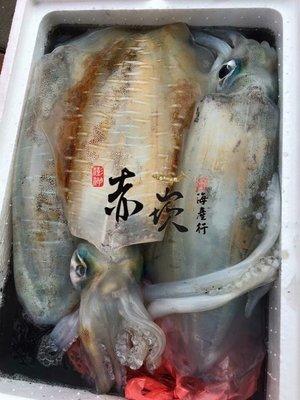 澎湖軟絲 魷魚  600g 澎湖赤崁峰海產行-海鮮產地宅配網