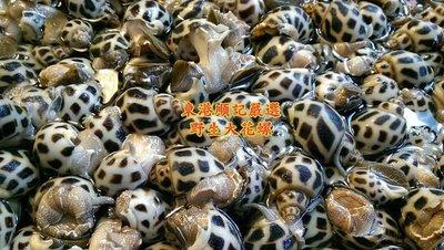 東港順記 野生 特大顆 象牙 花螺 600g$550 鮮甜美味香Q彈牙 野生捕撈 無現貨需預購 下標前請先詢問