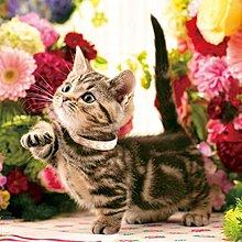 拼圖專賣店 日本進口拼圖 33-189(300片拼圖 花間散步的貓咪)