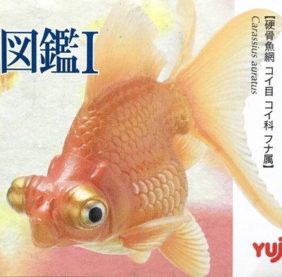 Yujin 原色観賞魚図鑑Ⅰ原色觀賞魚圖鑑 (Telescope Eye 赤出目金 凸眼金) 金魚 2006年 最後一隻