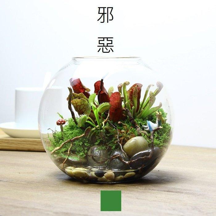 DL-16 食蟲植物 捕蠅草 食蟲草景觀瓶 花盆花器 DIY苔蘚微景觀生態瓶 小品盆栽 多肉植物 迷你盆栽