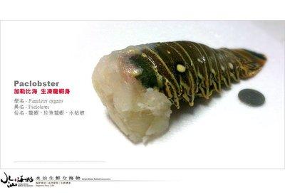 【水汕海物】加勒比海 大1kg級龍蝦摘取純重龍蝦身(淨重300g)。95折優惠中 !『門市熱銷、品質保證』