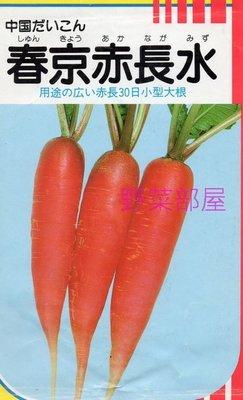 【野菜部屋~蔬菜種子】I19 赤長二十日大根種子1.5公克(約160粒) , 長12公分左右 , 收成快~