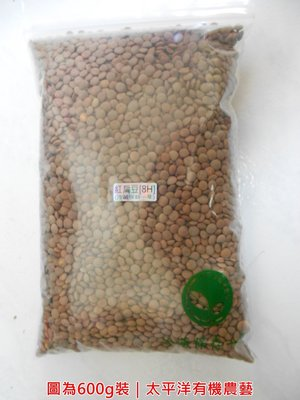 紅扁豆種子 1/2斤(300g)裝 義大利進口 可水耕/土耕/煮食 95%高發芽率【芽菜種子/芽苗菜種子/生菜種子】