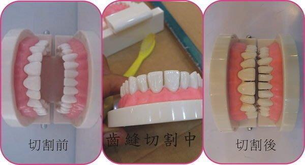 褓姆褓母保母術科練習牙齒模型-洗澡娃娃-齒模 口腔清潔 寶寶教學練習(現貨供應)