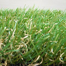 *二十四年老字號人工草專業*超漂亮的4CMPE高品質人工草皮內有枯草,198CMX50CM一塊