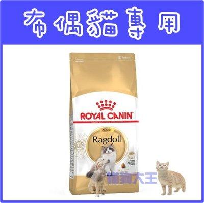 **貓狗大王**皇家布偶貓----2公斤