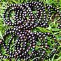 &&~紫雲軒水晶~&&【天然金屬光深紫色系舒俱徠來石手珠/手鍊】1標1條   6.6mm