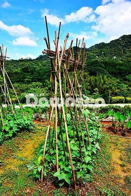 台灣圖片.照片出租.菜園.專業攝影師拍攝.想租多少價格.你決定專案.