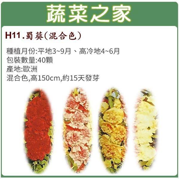 【蔬菜之家】H11.蜀葵種子40顆(混合色,高150cm.花卉種子)