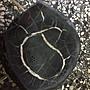【強強二手商品】龜甲石茶盤最長寬35cm髙8cm