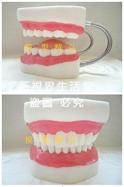 【新視界生活館】牙齒護理牙無牙縫、人體牙齒模型護理、牙齒示教人體口腔6倍放大模型口腔3602{XSJ319721497}