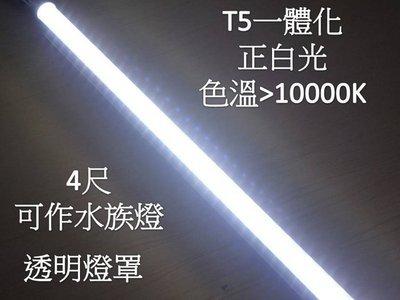 【凱利照明】T5 4尺 LED水族燈  不斷光 透明罩 色溫 13000k  白光