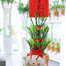 【綠風園藝~ 開運竹 宅配】叮噹招財貓三層開運竹【送禮盆栽】07