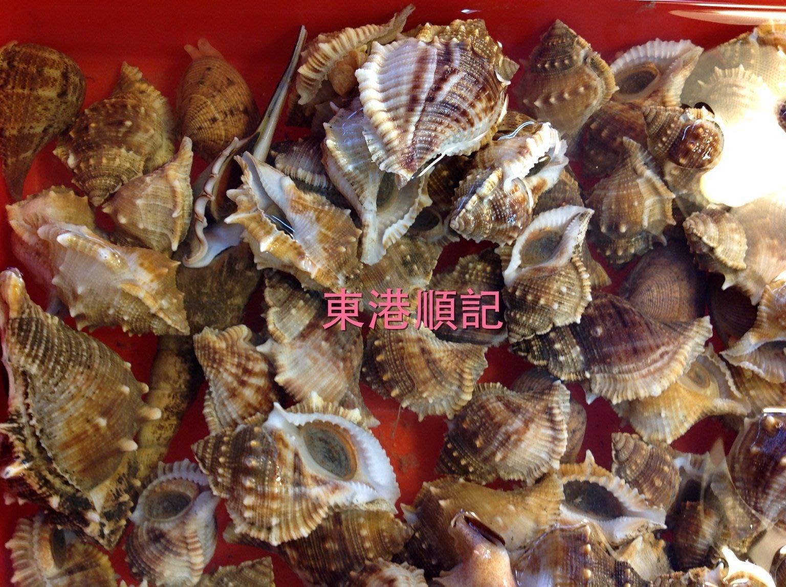 東港順記 魚船當日捕撈活體  大顆  海螺  刺螺 烤肉必備 香甜Q彈