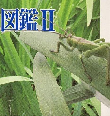 Yujin 立體百科事典 原色日本昆蟲圖鑑II Part 2 (Hexacentrus unicolor 斑翅草螽)