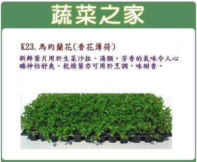 【蔬菜之家】K23.馬約蘭花(香花薄荷...
