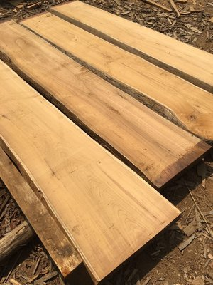 【緬甸柚木-TKWOOD】 ❤(寬30-49cm)柚木書桌・原木桌板・柚木吧檯/餐桌・柚木地板・柚木拼板、家具、樓梯板