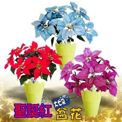 聖誕紅盆花 * 七大朵 * 高級織絨布/金蔥布*  花朵約22cm*耶誕、聖誕樹佈置必備【聖誕特區】
