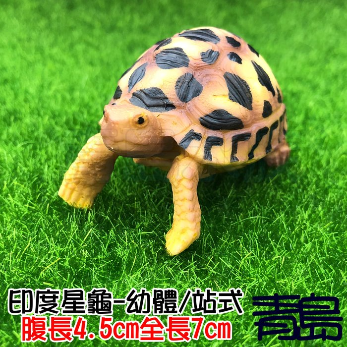 Y。。。青島水族。。。A2中國NOMO諾摩---仿真陸龜模型 3D擬真模型 烏龜/陸龜公仔 裝飾==印度星龜/幼體/站式