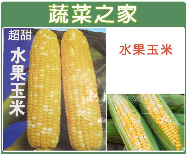 【蔬菜之家】G08.水果玉米種子20顆(F1.黃白雙色玉米,雙色超甜玉米,穗大,甜度高.蔬菜種子)