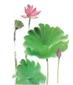 小妮子的家@手繪水移畫/古典家具彩繪轉印貼紙/玻璃貼/磁磚貼75-11