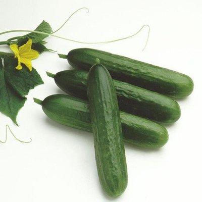 【媽咪蔬果園】荷蘭水果小黃瓜 全雌性品種   ※(種子全面直購價每包12元.購買商品滿300元免掛號運費)