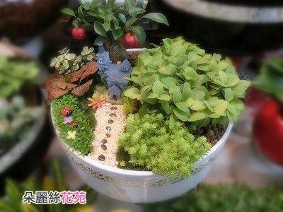 【E9 /春不荖組合盆栽】☆開幕盆栽 ♡中和區朵麗絲花店 盆栽組合創意設計