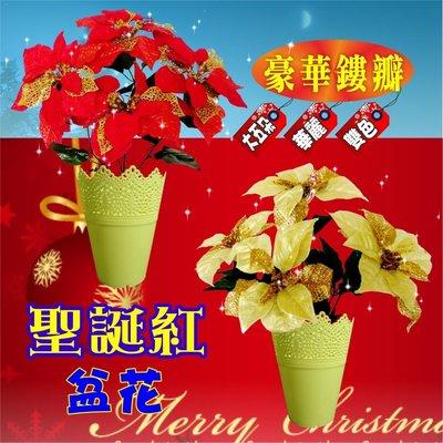 聖誕紅盆花 豪華金蔥  雙色大五朵 直徑22公分 永不凋謝 繽紛裝飾 多款聖誕樹【聖誕特區】
