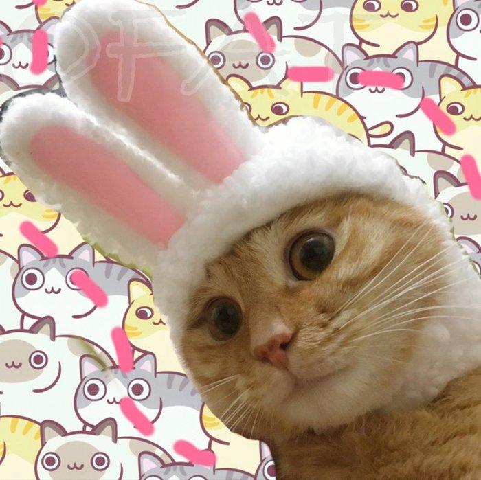萌萌的  貓咪變兔子 貓咪兔子帽 狗變兔子 寵物搞笑服 寵物頭套 兔子頭套 兔耳帽 貓咪兔耳帽 狗兔耳帽【HP16】