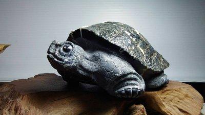 [尚軒-龜之鄉]蘇承志老師黑膽石雕亀/龜甲石