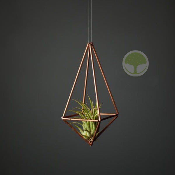 空氣鳳梨花盆花架花托壁掛微景觀手工原創himmeli 植物牆垂直綠化