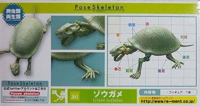 RE-MENT POSE SKELETON 巨龜盒玩 會亂動的化石骷髏兩棲爬蟲類 擺飾 模型 可動關節 禮物 收藏