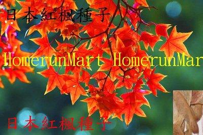IKR日本紅楓種子5粒日本黃金楓種子紫楓種子美國紅楓種子藍楓種子紫藤種子奇特蘭花種子多肉種子玫瑰種子茶花種子多肉植物種子