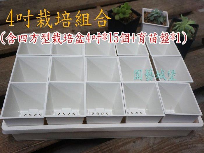 【園藝城堡】4吋栽培組合(含四方型栽培盆4吋白色*15個+育苗盤*1個)