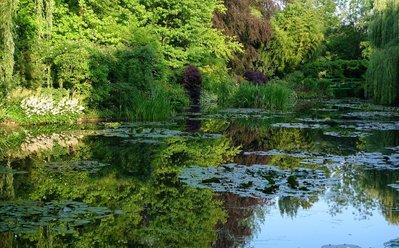 【水花園】生態池、庭園景觀池、濕地設計/施工/營造 (國寶級水生植物專家吳聲昱博士團隊)