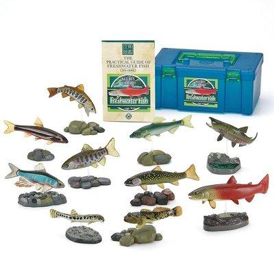 日本正版 立體圖鑑擬真模型BOX 日本的淡水魚 10種組 小模型 小公仔 日本代購